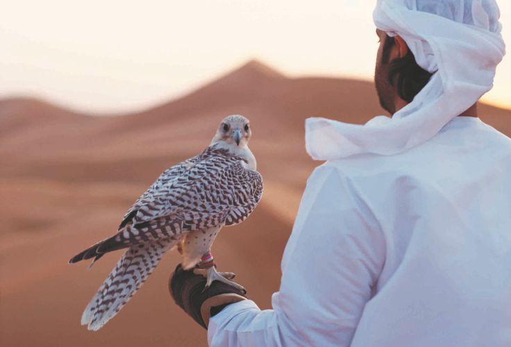 Fauconnerie - Abou Dhabi - Émirats Arabes Unis