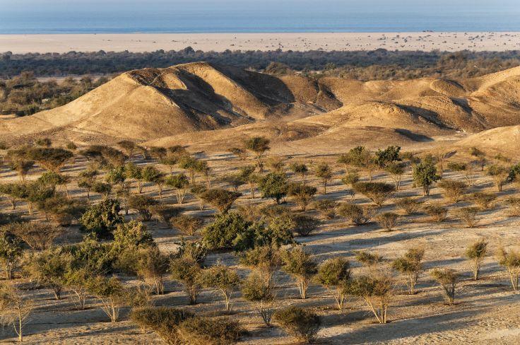 Abou Dhabi Desert - Emirats Arabes Unis
