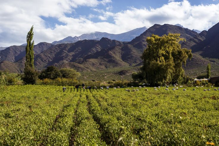 Région de Salta - Argentine