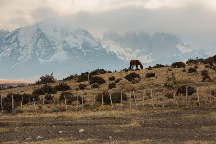 Parc national Torres del Paine - Patagonie - Argentine