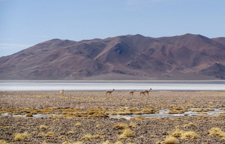 Hauts plateaux d'Atacama : ses lagunes et salines - Chili