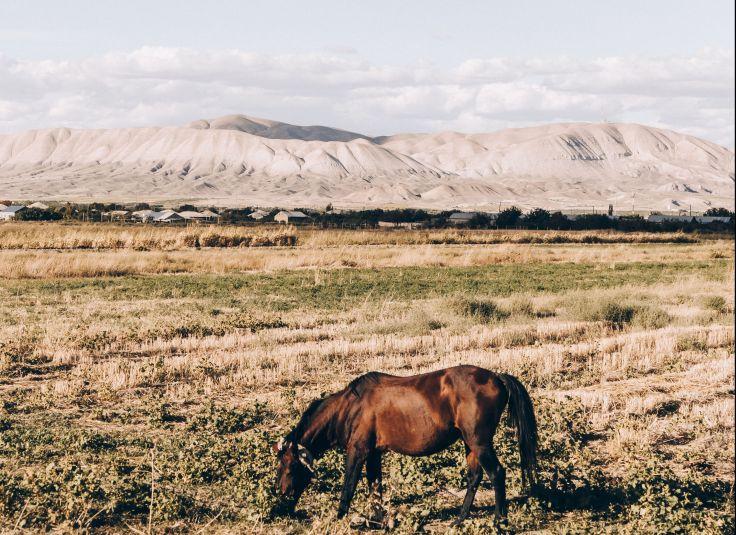 Vosketap - Ararat - Route du sud vers Yerevan - Arménie