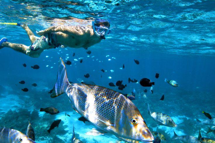 Snorkelling dans la barrière de corail - Ningaloo Reef - Autralie