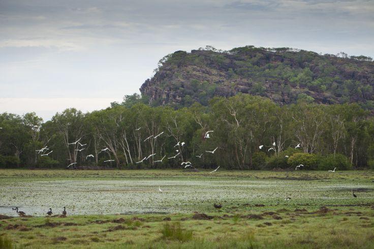 Parc national de Kakadu - Territoire du Nord - Australie