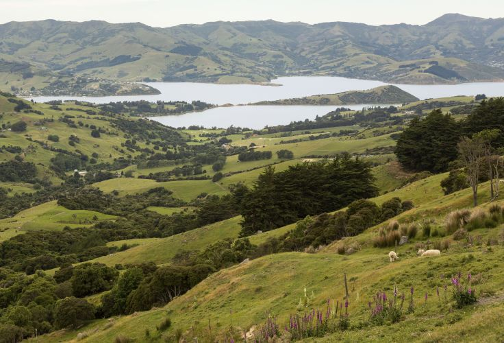 Akaroa - Nouvelle Zélande