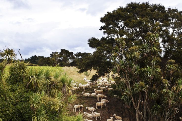 Région de Martinborough - Wellington - Nouvelle Zélande