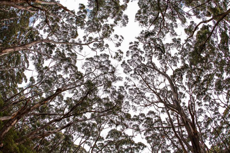 Ile de Kangourou - Australie-Méridionale - Australie