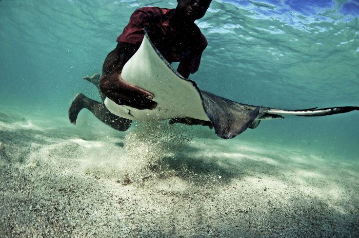 Buller au Belize - Séjour plongée à South Water Caye