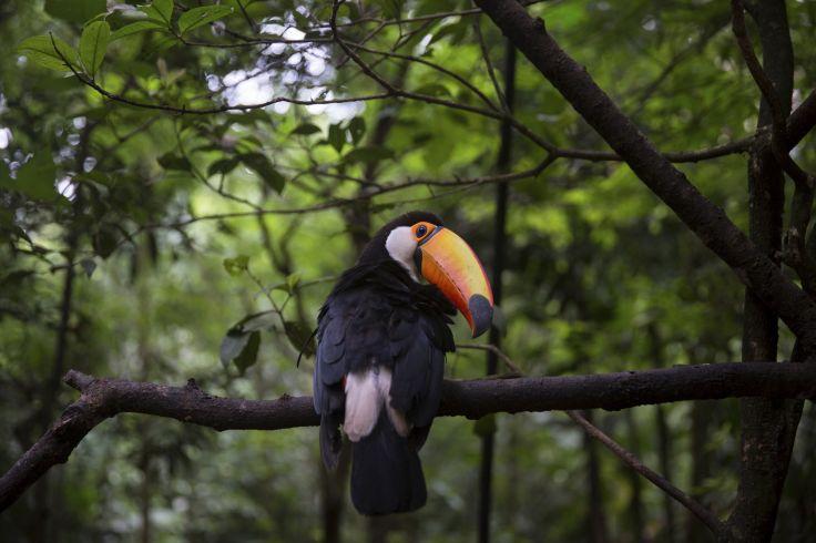 Chutes d'Iguazú - Brésil