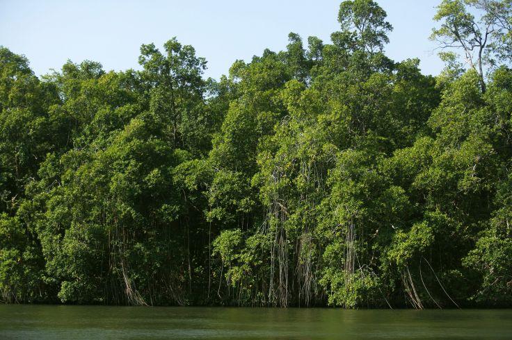 Parc national des Lençóis Maranhenses - Brésil