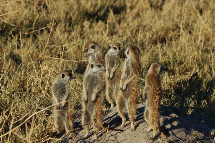 Parc de Makgadikgadi - Bostwana