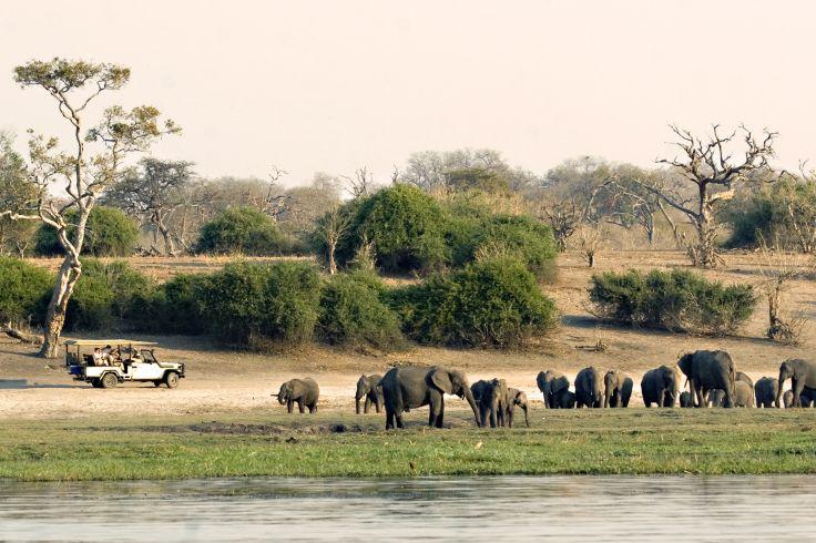 Parc national de Chobe - Botswana
