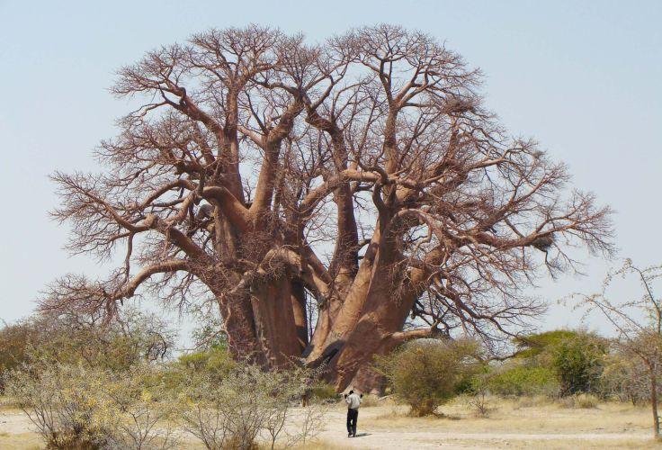 Makgadikgadi - Botswana