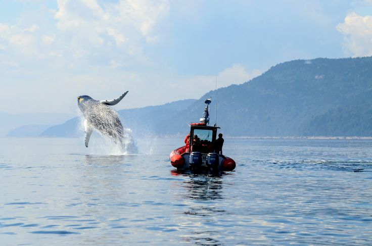 Observation de baleine - Manicouagan (Côte-Nord) - Québec - Canada