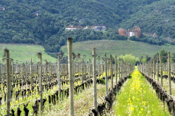 De l'Atacama à Santa Cruz - Art de vivre & bons vins chiliens