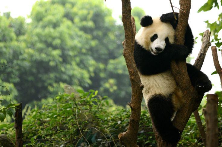 Monts sacrés & pandas géants - Voyage à travers le Sichuan