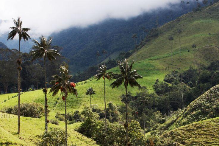 Vallée de Cocora - Quindio - Colombie