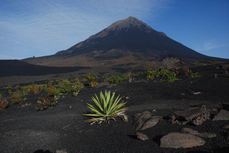Caldeira et volcan Pico - Culture de la vigne - Ile de Fogo