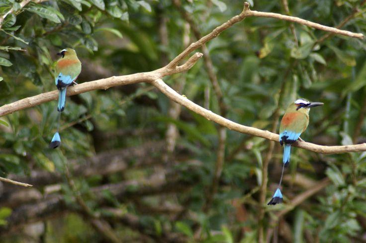 Tarcoles - Costa Rica