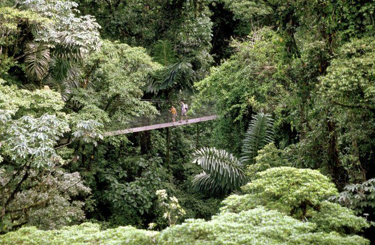 Aventures en famille - Reptiles & rouleaux au Costa Rica