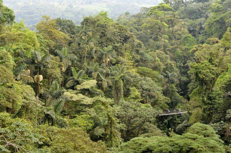 Aventures en famille - Reptiles & rouleaux du Costa Rica