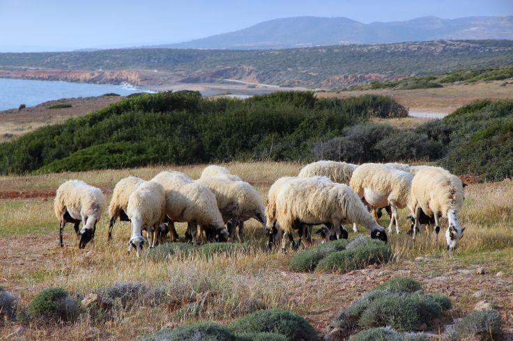 Région de Paphos - Chypre