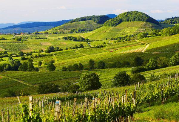 Des vignobles aux alpages  - Voyage chic en Forêt Noire