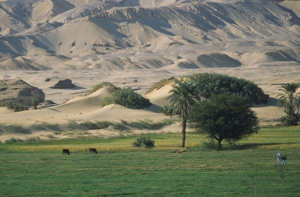 Sur Mesure en Égypte : Les oasis du désert libyque