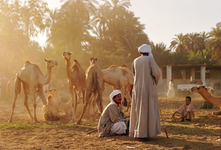 Région de Kom Ombo - Egypte