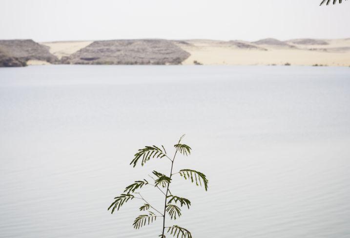 Lac Nasser - Abou Simbel - Egypte