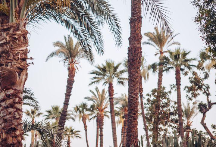 Jardins du Sofitel Winter Palace - Louxor - Egypte