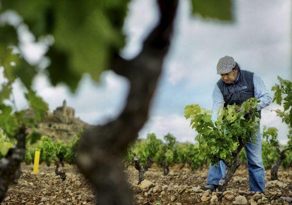 De Bilbao à la  Rioja - Arts et vins au pays Basque