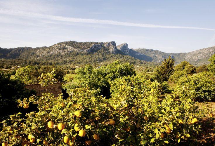Majorque- Espagne