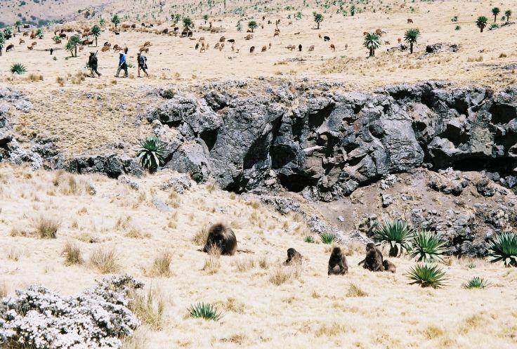 Simien - Ethiopie