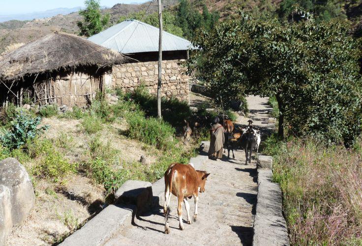 Route de Lalibela à Mékélé - Ethiopie