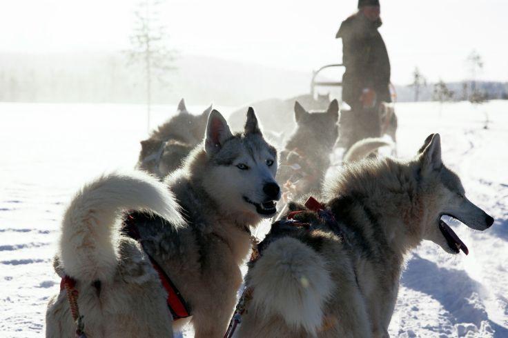 A deux - Noël romantique en Laponie