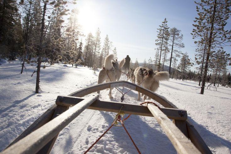 Pour petits & grands trappeurs - La Laponie avant les fêtes !