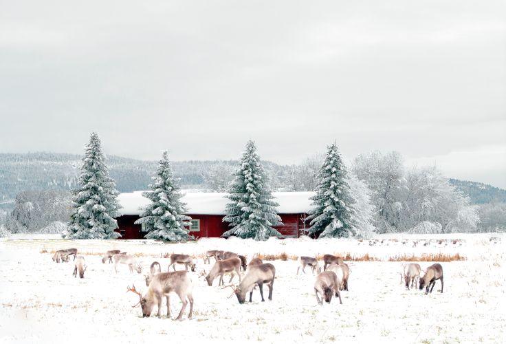 Laponie - Finlande