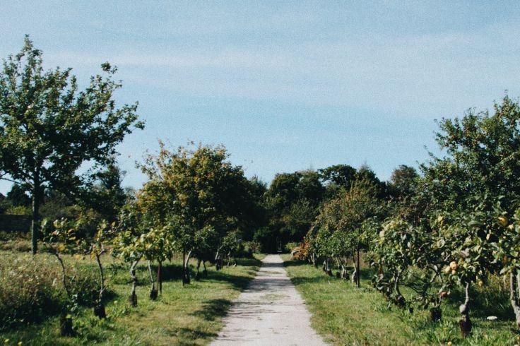 Jardins de l'Abbaye de Beauport - Paimpol - Bretagne - France