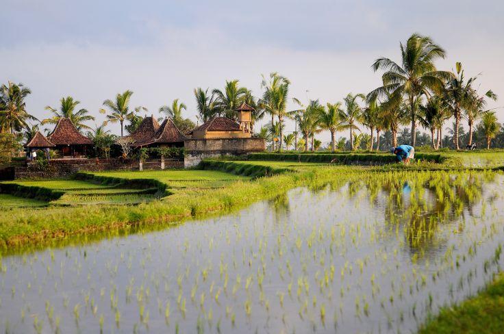 Rizières - Ubud - Bali - Indonésie