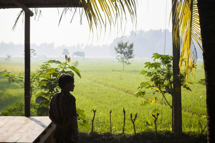 Jungle, rizières, plages - Bali, des dieux et des macaques