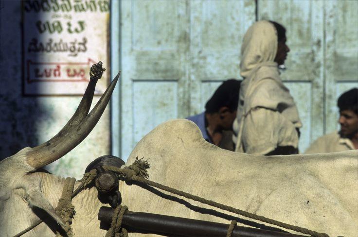 De Madras à Cochin - Voyage en Inde du Sud
