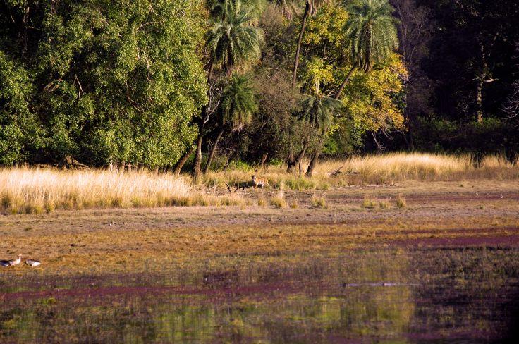 Parc national de Bandhavgarh - Inde