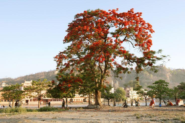 Haridwar - Uttarakhand - Inde