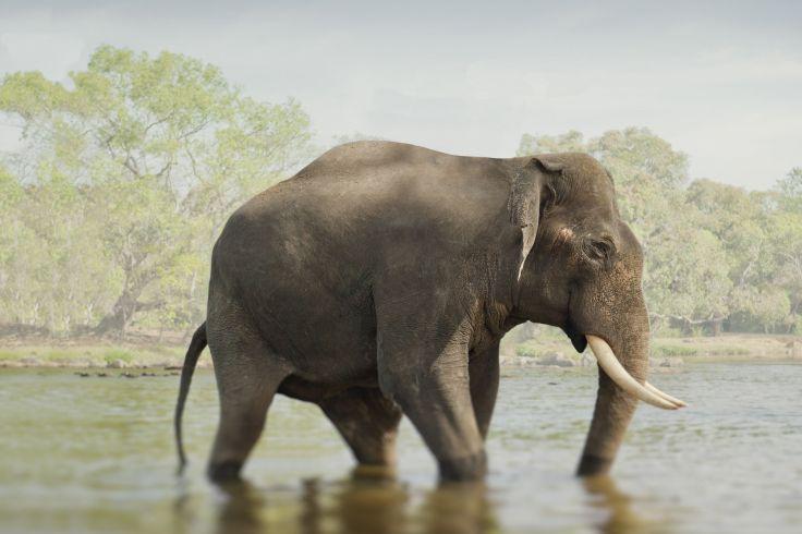 Inde du Sud- Beaux sites & réserves du Karnataka, plage du Kerala