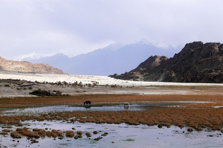Sumur - Ladakh - Inde