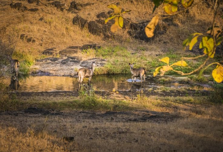 Parc national de Gir - Gujarat - Inde