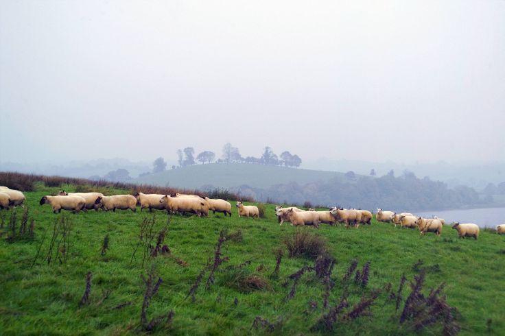 Région de Enniskillen - Irlande du Nord - Royaume-Uni