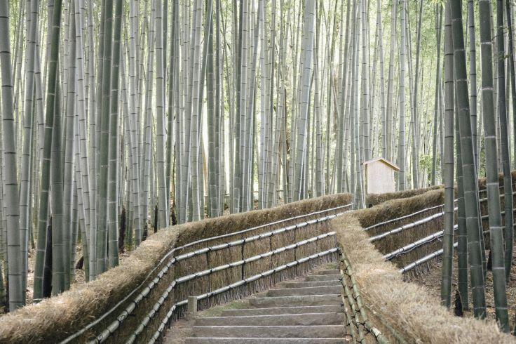 Arashiyama - Japon