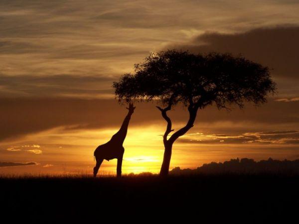 Voyage au Kenya - Du Kilimandjaro au lac Victoria